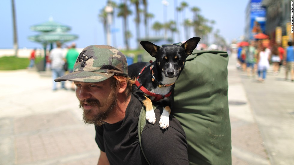 Baby Girl walked the Venice Beach boardwalk in California perched on the back of her owner.