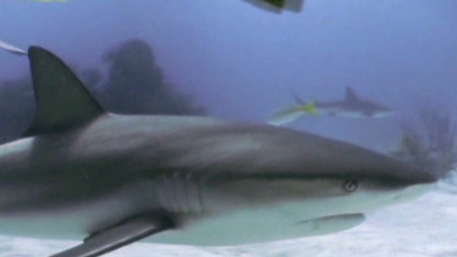 Are sharks an actual threat to people?