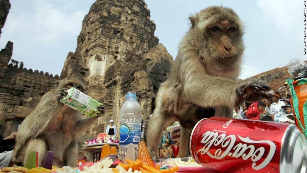 In a bid to woo tourists, Thailand's Lopburi province started up the annual Monkey Buffet Festival. Last year, more than 4,400 pounds of fruit and vegetables (and the odd soda) was served up to the region's primates.