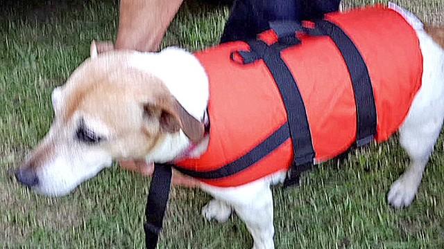 pkg mclaughlin man saves dog_00003716.jpg
