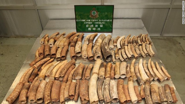 Tusks seized by Hong Kong customs earlier this month. They were shipped from Burundi before being discovered during transit.