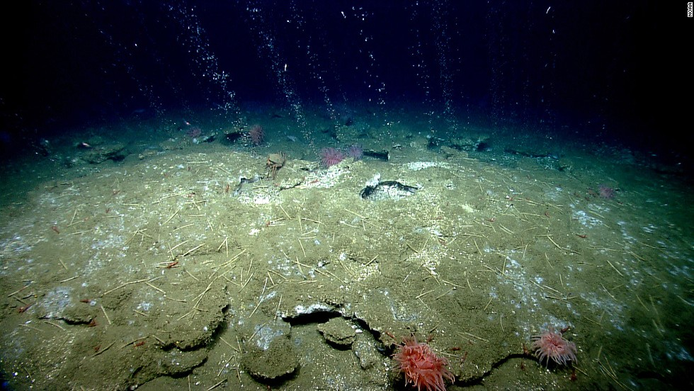 Methane bubbles flow in small streams out of the sediment on the ocean floor.
