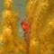 09 deepsea exploration