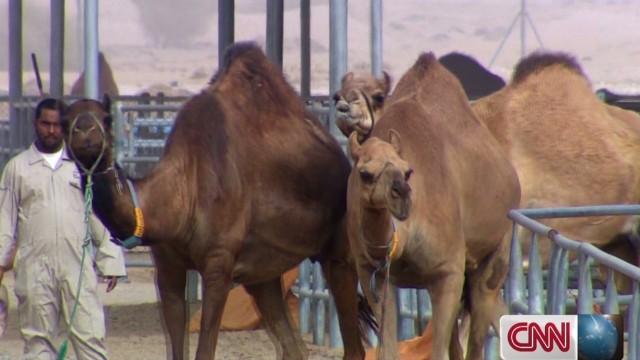 spc marketplace middle east camel milk_00022504.jpg