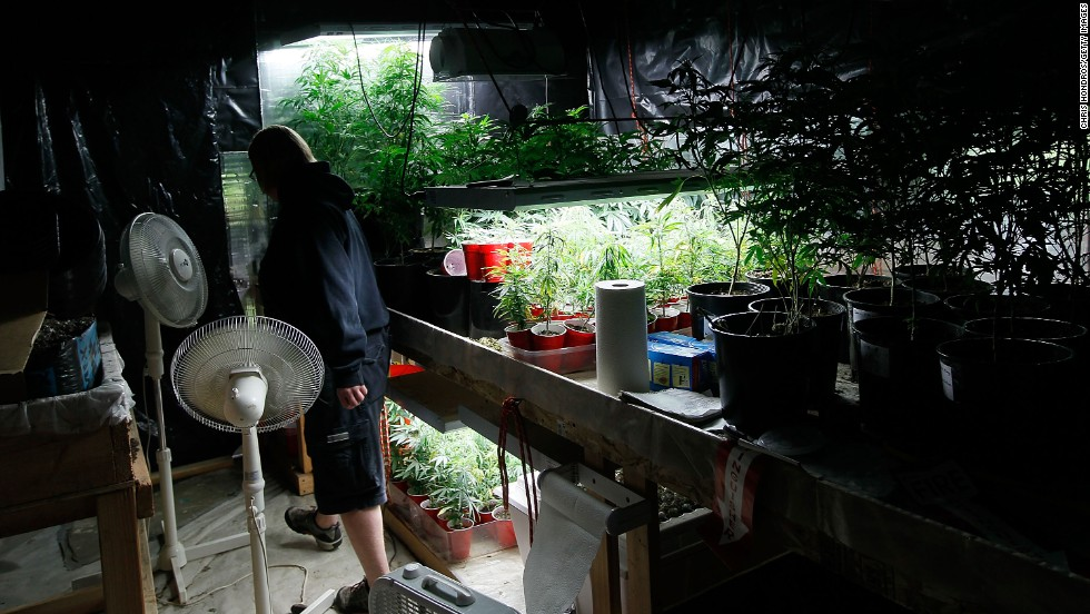 Sonja Gibbins walks through her growing warehouse in Fort Collins, Colorado, on April 19, 2010. Since the state approved medical marijuana in 2000, Colorado has seen a boom in marijuana dispensaries, trade shows and related businesses. So far 20 states and the District of Columbia have made smoking marijuana for medical purposes legal.