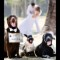 06 pet weddings