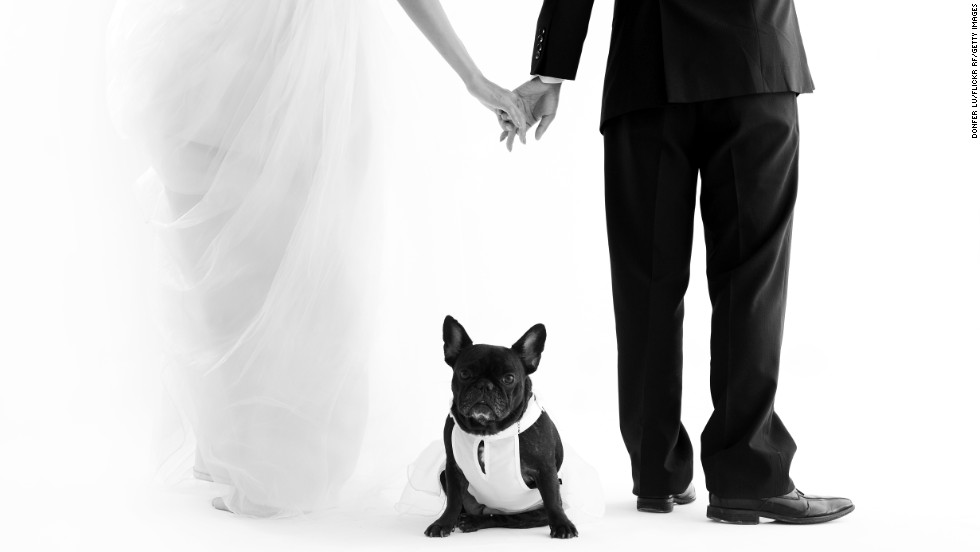 Pets are often the first creature a couple raises together, and stand as an emblem of the couple.