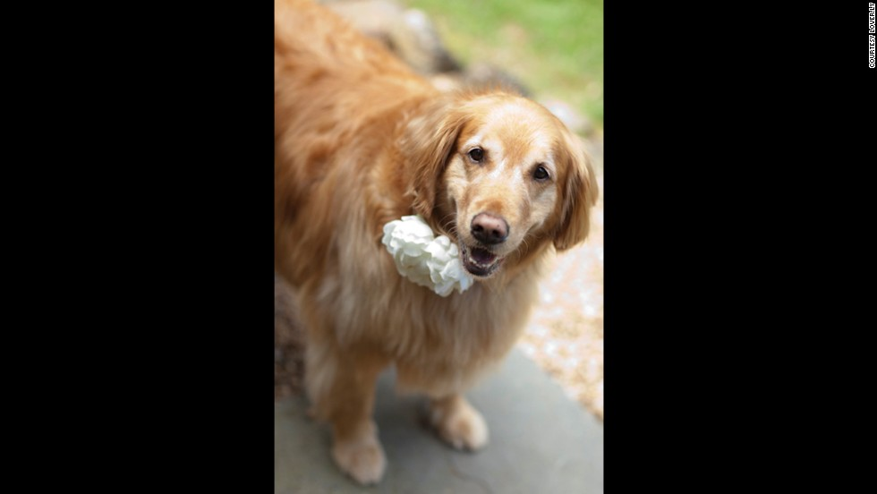 Flowers, bejeweled collars and bow ties are common ways to dress a pet involved in a wedding ceremony.
