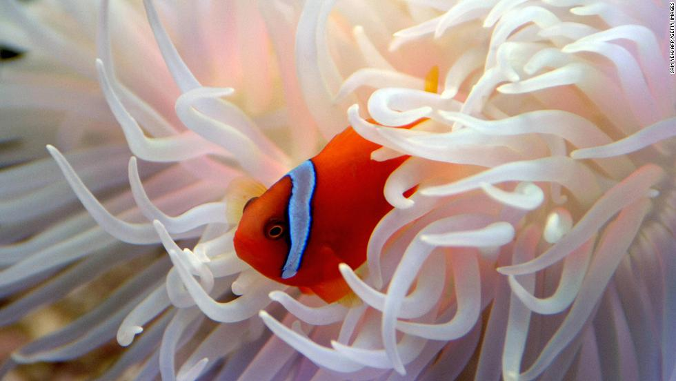 """Oh, hi there. I was just having lunch in my anemone. I'd invite you in, but..."""