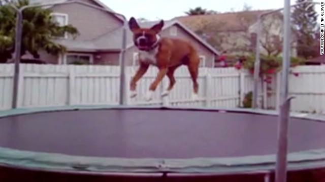 orig distraction dog loves trampoline_00001109.jpg