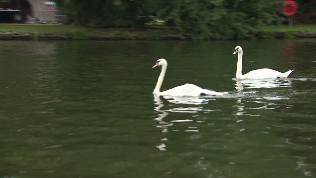 Queen's swan killed, barbecued