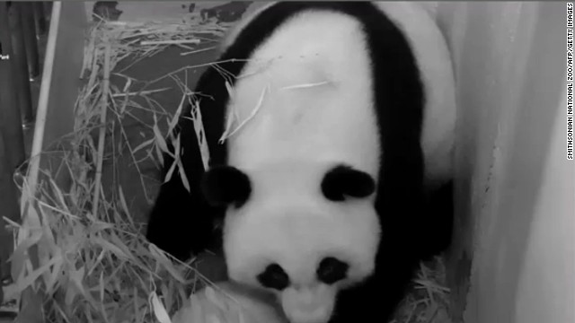 Need your panda fix? Look elsewhere. The National Zoo's beloved panda cam is going dark.