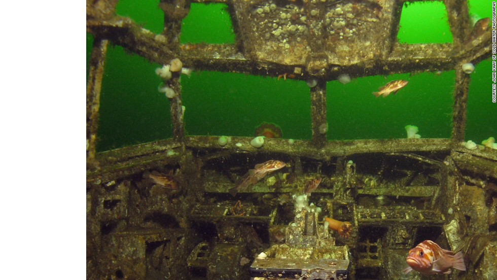 "Once a Boeing 737, this artificial reef off the coast of British Columbia is so covered in algae that it's hard to believe that it was once airborne. ""It sits in about 90 feet of water suspended on an underwater 'cradle,' to simulate 'flying' underwater,"" says Deidre Forbes McCracken of the Artificial Reef Society of British Columbia. ""The reef attracts divers from all around the world."""