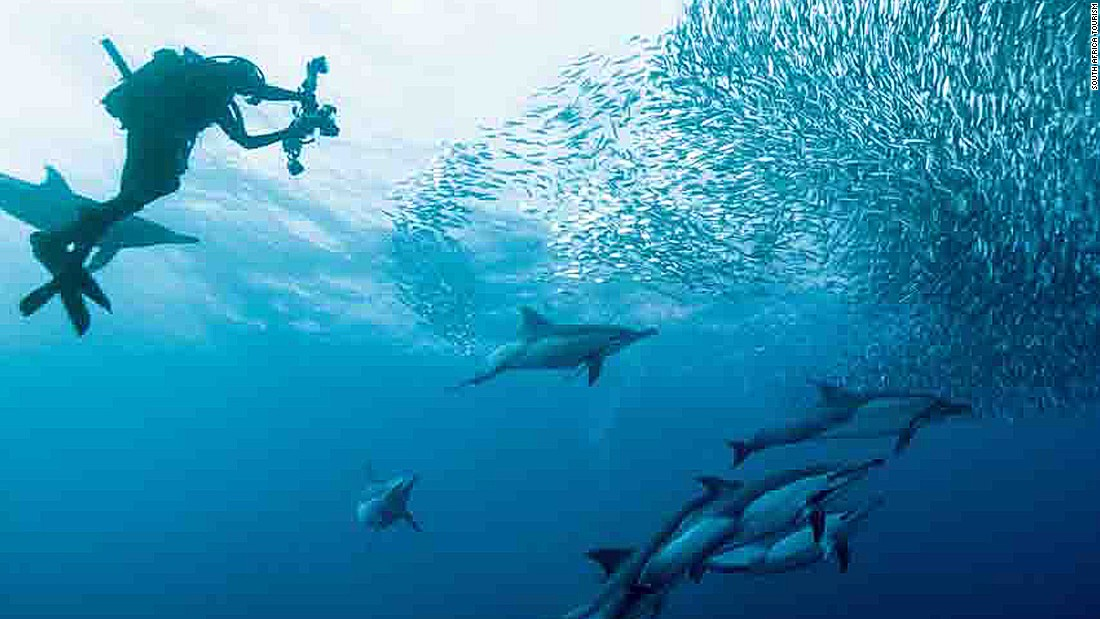 "Dubbed ""the greatest shoal on earth,"" the sardine run on South Africa's Wild Coast holds two titles -- the world's largest animal migration also featuring the greatest gathering of predators on the planet."