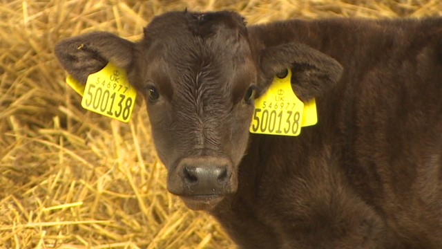Breeding world's most expensive beef
