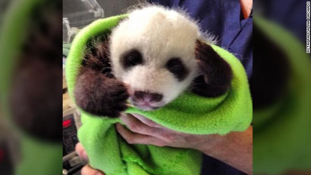 130829121710-panda-ig-blanket-story-top.