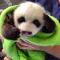 panda ig blanket