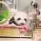 panda ig incubator