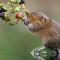 British Wildlife Photography 12