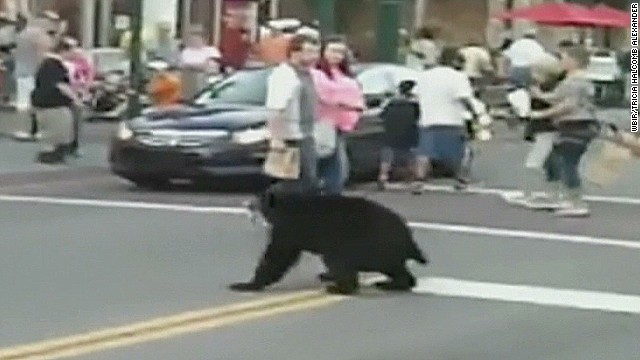 dnt black bear gatlinburg downtown_00012226.jpg