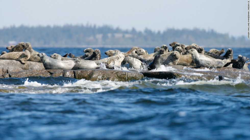 Other inhabitants of Bohuslän you might spot, apart from mink and reindeer, are seals, which, like kayaks, do better in the water than on land.