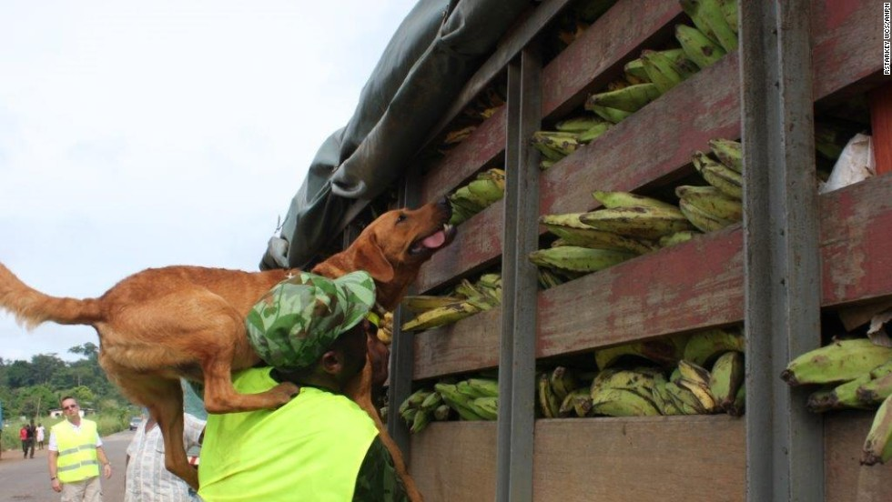 The two dogs are trained to detect ivory, leopard skin, shark fin, bushmeat and other contraband.
