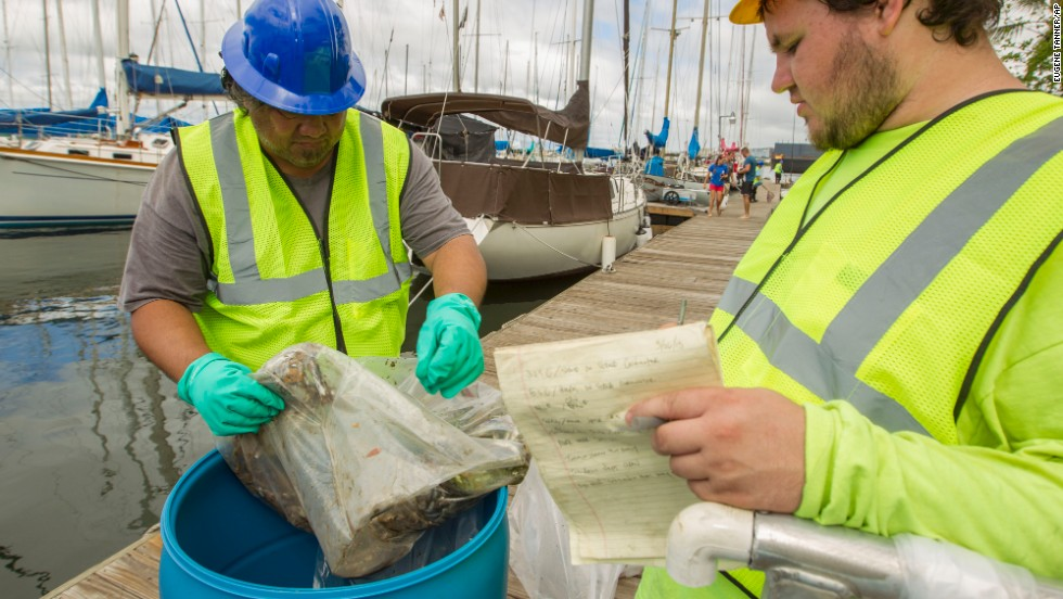 Pacific Environmental Corp. employees toss dead fish into a barrel on the La Mariana Sailing Club dock in the Keehi Lagoon in Honolulu on Thursday, September 12. A cracked pipe leaked about 233,000 gallons of molasses near the Honolulu Harbor and is being blamed for the killing of marine life. The cracked pipe has been repaired and is no longer leaking molasses.