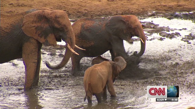 Saving Kenya's elephants