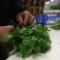 Cilantro Germany Market