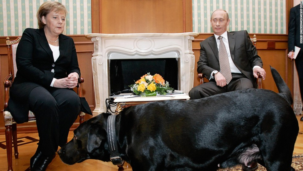 "Merkel has reportedly been afraid of dogs since she was bitten by one in 1995. <a href=""http://www.cnn.com/2013/06/21/business/russia-merkel-putin-defterios/index.html"">Russian President Vladimir Putin</a>, apparently aware of her dislike of the animals, made headlines by bringing his pet Labrador Koni into a meeting with Merkel in 2007."