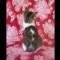 03 kittens RESTRICTED
