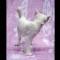 05 kittens RESTRICTED