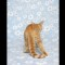 07 kittens RESTRICTED