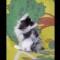 08 kittens RESTRICTED