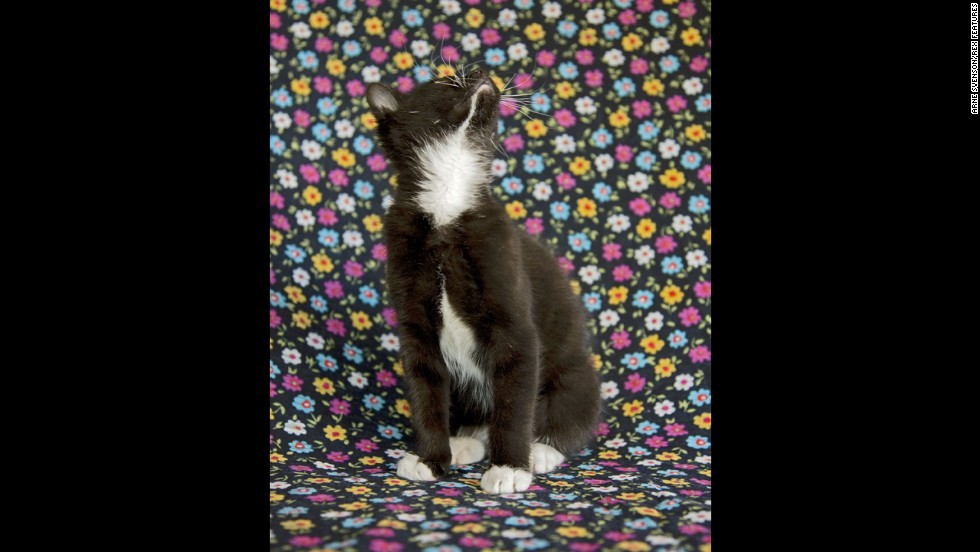 Svenson photographed 50 6- to 8-week-old kittens from the Animalkind rescue shelter.