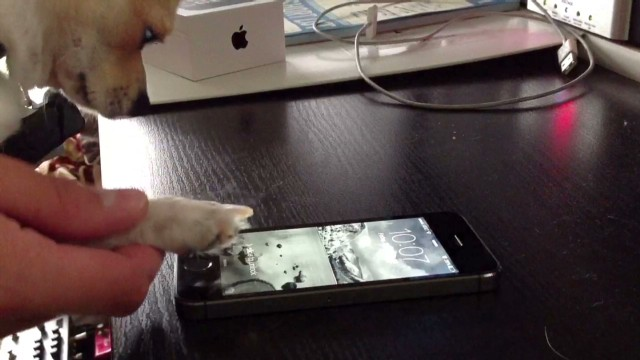 iPhone fingerprint sensor works for dogs