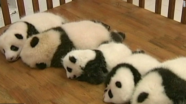 See baby pandas in crib