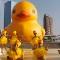 taiwan duck 2