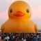 taiwan duck 3
