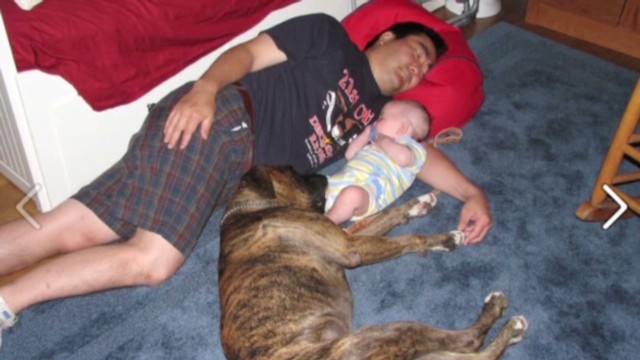 pkg guide dog dies to save boy from car_00002030.jpg