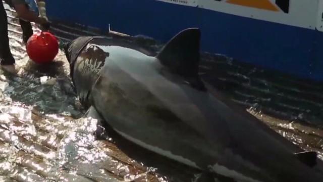 spc art of movement sharks b_00012713.jpg