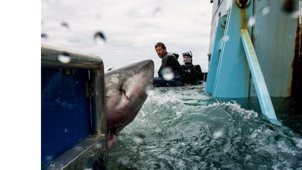 """""""When I'm in the water and see a shark, I can keep my fear completely under control, which helps me because they feel your heart beat, your sweat,"""" said McBride."""