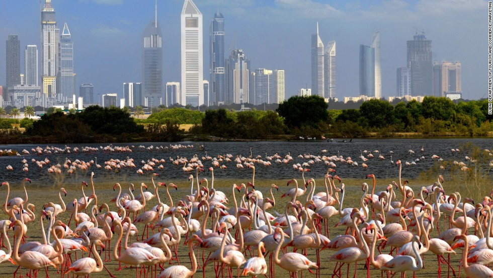 Right on the edge of Dubai there's a verdant saltwater paradise that's home to thousands of birds including flamingos, ospreys and eagles.