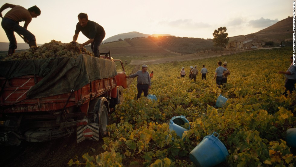 Boutique vineyards are at the vanguard in producing quality wines on Sicily -- table wine rules no longer.