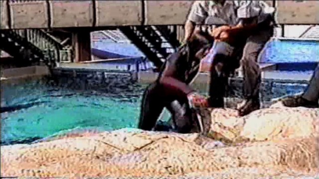 The truth behind orcas in captivity