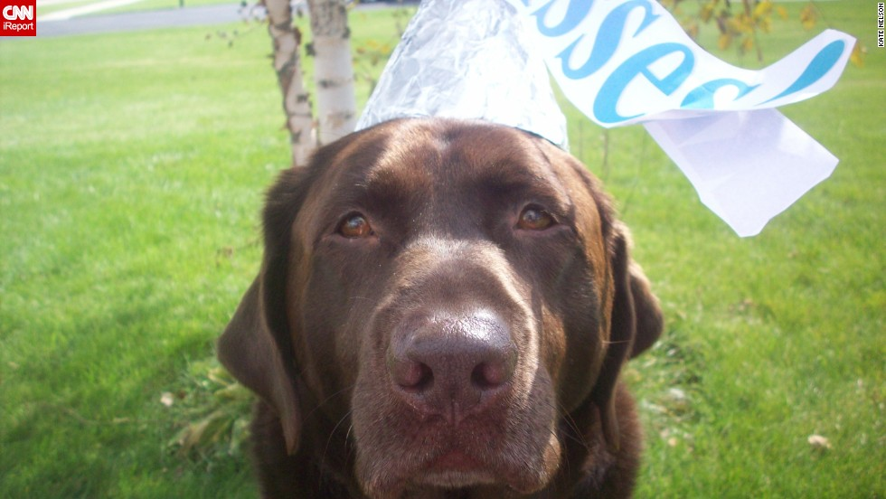 "A Hershey's Kiss was the <a href=""http://ireport.cnn.com/docs/DOC-344142"">obvious costume choice</a> for Bailey, iReporter Kate Nelson's sweet chocolate Lab."