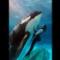 01 captive whales 1008