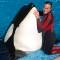 05 captive whales 1008