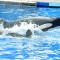 06 captive whales 1008