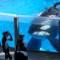 07 captive whales 1008